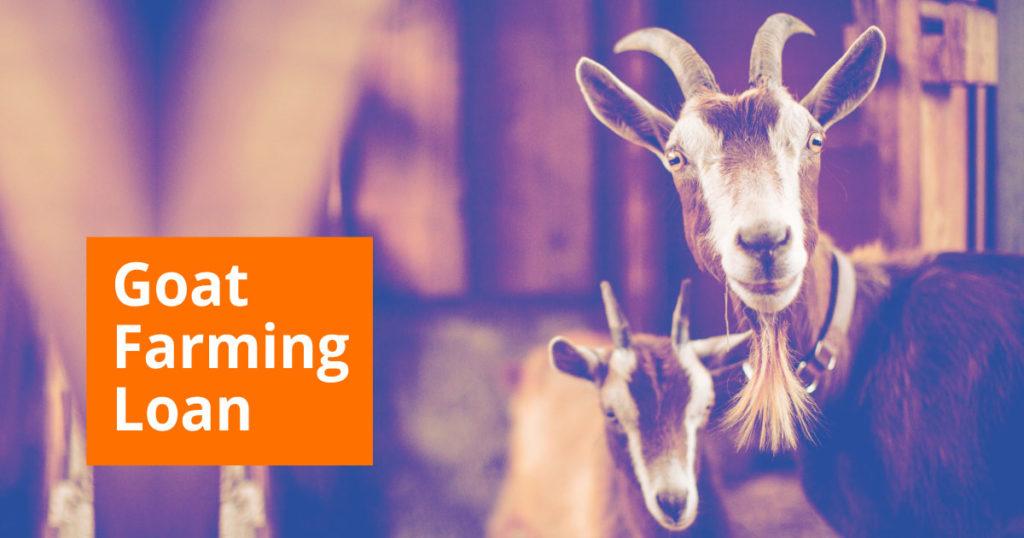 Goat Farming Loan